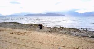 普雷斯帕湖在马其顿在11月,寄生虫摄影 免版税库存图片