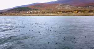 普雷斯帕湖在马其顿在11月,寄生虫摄影 库存照片
