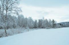 普雷斯蒂内雪白色在树冰以后的森林风景 免版税库存照片