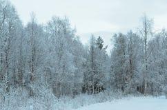 普雷斯蒂内雪白色在树冰以后的森林风景 库存照片