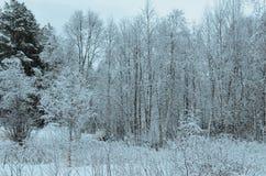 普雷斯蒂内雪白色在树冰以后的森林风景 库存图片