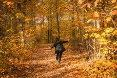 晴天在一个伟大的秋天森林里 库存图片