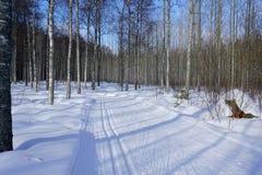 晴天在冬天森林里 库存图片