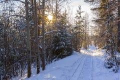 晴天雪道的冬天森林向在的电烫城市 免版税库存图片