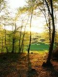 晴朗三天的森林 库存图片