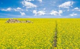 晴朗开花的领域 免版税库存图片
