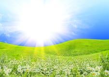 晴朗日的夏天 库存图片
