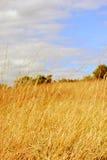 晴朗日的种秣草地 免版税库存图片