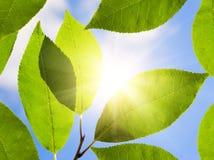 晴朗日绿色的叶子 库存照片