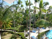 晴朗的上面棕榈树休息 免版税库存图片