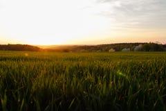 晴朗的乡下日出、绿色领域和草甸 蓝天 库存图片