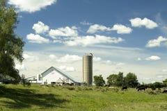 晴朗的农场 库存图片