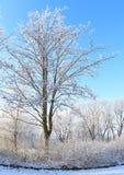 晴朗的冬日 库存图片