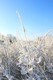 晴朗的冬日 免版税库存照片