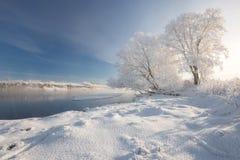 晴朗的冷淡的冬天早晨 与蓝天,用厚实的弗罗斯特盖的树的一个现实冬天白俄罗斯语风景,一条小河 库存照片