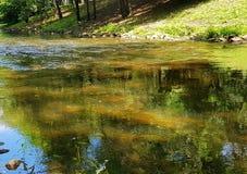 晴朗的天气的森林河 免版税库存照片