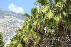 晴朗的安塔利亚 棕榈树和山是最佳的比赛 免版税库存照片