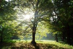 晴朗的早晨在公园 免版税库存照片