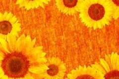 晴朗的明亮的向日葵构筑文本领域,复制空间 图库摄影