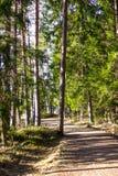 晴朗的春日在森林里 库存照片