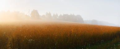 晴朗的有雾的早晨 免版税库存照片