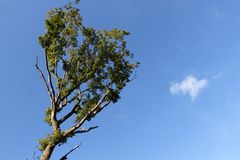 晴朗的树上面 库存图片