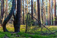 晴朗的森林关闭 免版税图库摄影