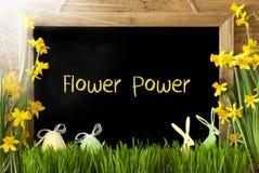 晴朗的水仙,复活节彩蛋,兔宝宝,文本和平与爱情 库存图片