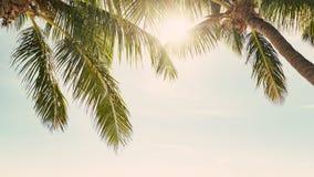 晴朗的热带天空 免版税图库摄影