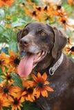 晴朗的狗 免版税库存照片