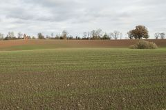 晴朗的秋天天用生长在领域的绿色麦子 库存照片