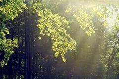 晴朗的结构树 库存图片