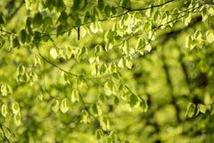 晴朗的绿色叶子 库存照片