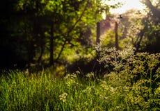 晴朗的绿色场面美好的edgsbaston res 库存图片
