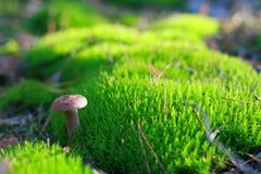 晴朗的蘑菇 库存照片