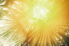 晴朗的被定调子的棕榈叶 免版税库存照片
