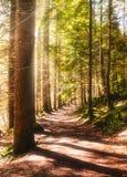 晴朗的道路在一个森林里在天时间 库存照片