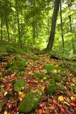 晴朗秋天喀尔巴阡山脉的日森林的山 库存图片
