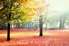 晴朗秋天的公园 免版税图库摄影