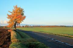 晴朗秋天的早晨 库存图片