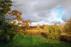 晴朗秋天背景美丽的日草横向的天空 库存图片