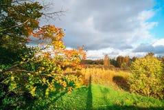 晴朗秋天背景美丽的日草横向的天空 免版税库存图片