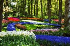 晴朗美好的庭院keukenhof的早晨 免版税库存照片