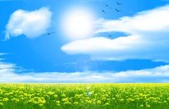 晴朗背景的天空 免版税图库摄影