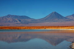 智利拉古纳licancabur火山 免版税图库摄影