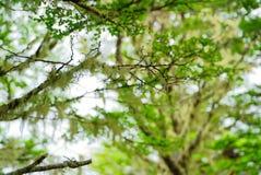 智利森林 库存图片
