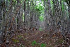 智利森林 免版税库存图片