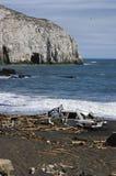 智利海岸影响海啸 免版税图库摄影