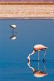 智利火鸟盐水湖结构 图库摄影