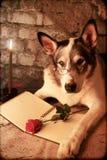 智力由烛光的狗佩带的玻璃 免版税库存图片